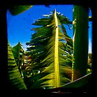 Banana Tree by ADMarshall