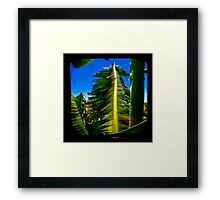 Banana Tree Framed Print