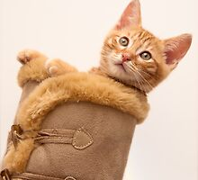 Puss in Boots by Gormaymax