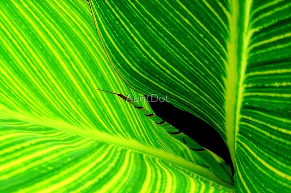 Leaf Lines by AuntDot