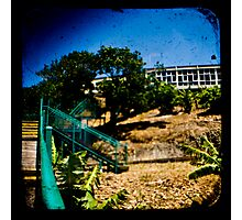 Banana Plantation Photographic Print