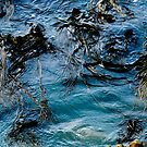 Spooky Sea Weed by john  Lenagan