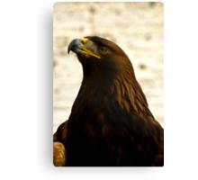 Golden Eagle #1 Canvas Print