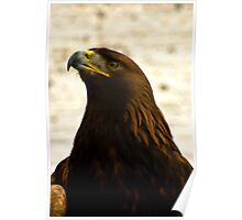 Golden Eagle #1 Poster