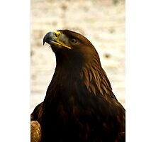 Golden Eagle #1 Photographic Print