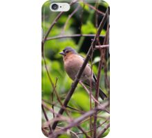 Perching Chaffinch Male iPhone Case/Skin