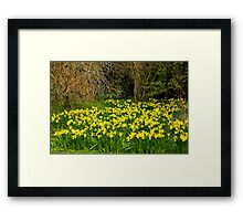 Yellow Trumpets Framed Print