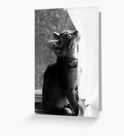 Zoe in the Window Greeting Card