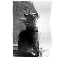 Zoe in the Window Poster