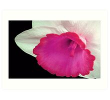 Narcissi in the Pink Art Print