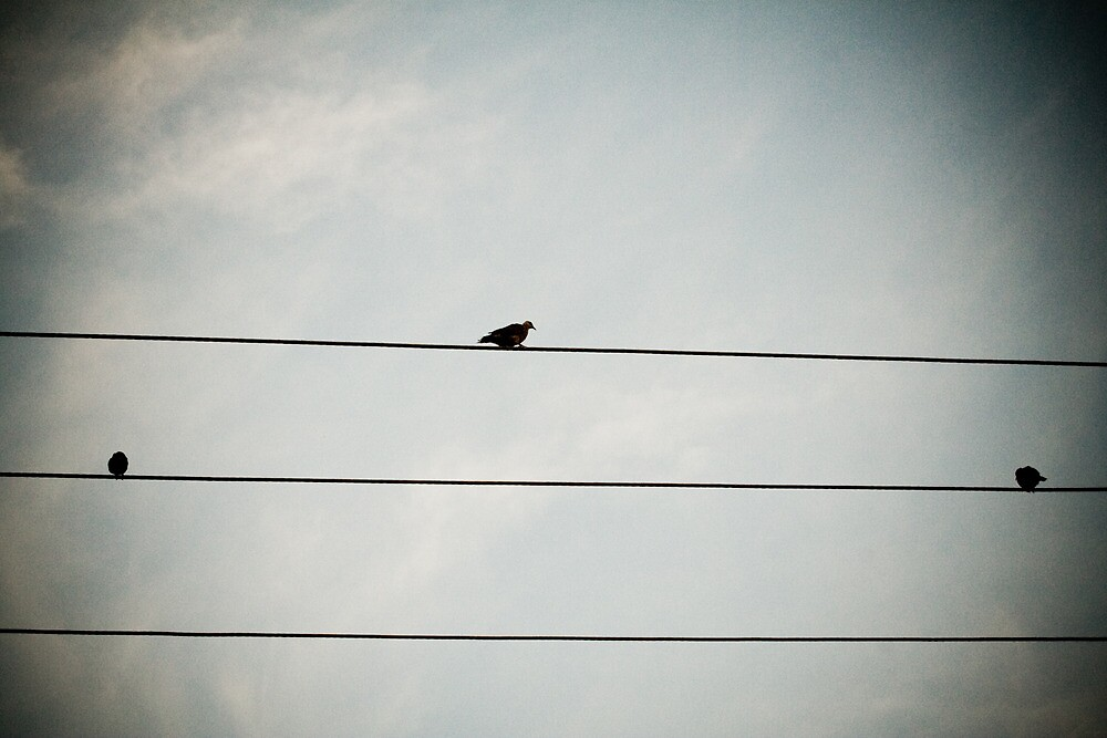 Birds on a wire by Chaminda Subasinghe