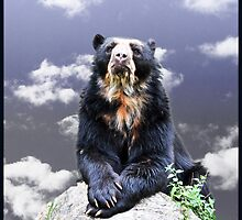 Andean Bear by amira