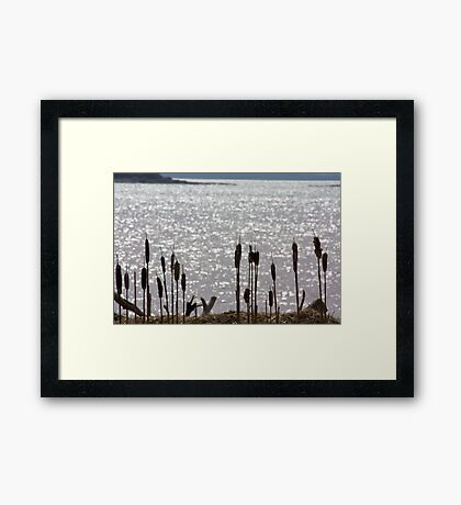 Cat's Tails By The River Framed Print