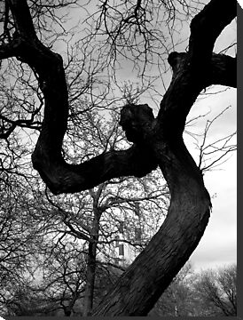 Creepy Faced Tree by tastypaper
