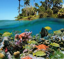 Tropical island and colorful underwater marin life by Seaphotoart