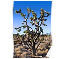A Joshua Tree (Yucca brevifolia) in the Mojave National Preserve Poster