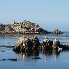 """On The Rocks"" by Gail Jones"