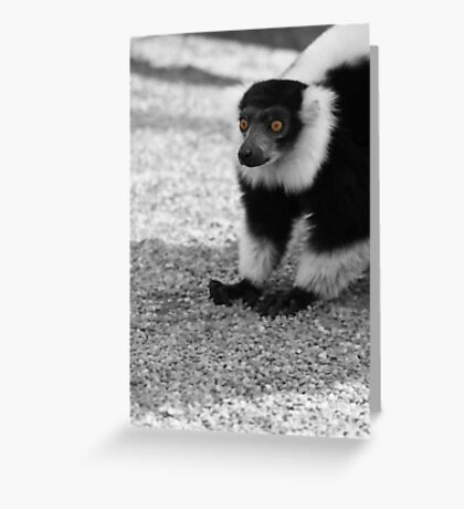 Lemar at Dudley Greeting Card