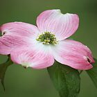 dogwood flower by ANNABEL   S. ALENTON