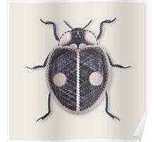 LadyBug - Black Poster