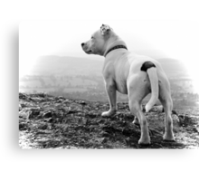 Millie on top of the Hills Canvas Print