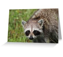 Stare Contest Greeting Card