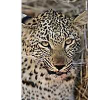 Snarl Photographic Print
