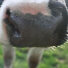 Nosey Cow #2 by Daisy-May