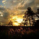 Golden Light by Liza Yorkston