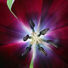 Beauty on the Inside by CherylBee