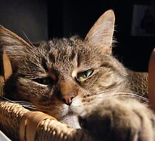 Momma Kitty in her Basket by DawnT