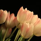 Marble Tulips II by RockyWalley