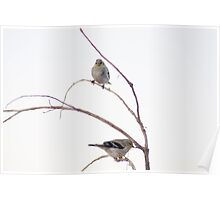 Two birds on a branch Poster