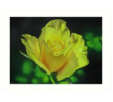 Yellow Rose - Midas Touch Art Print