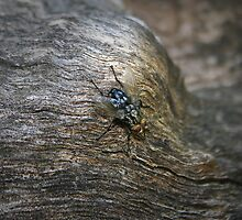 Mr. Fly Rests On The Log by S-n-D