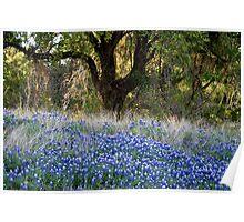 Springtime, Texas Style Poster