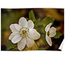 White Wildflower Poster