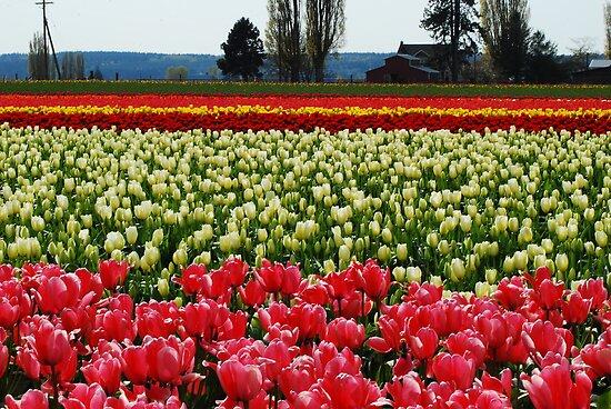 Spring Has Sprung! by Tori Snow