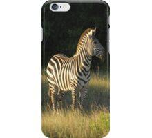 Grasslands Zebra iPhone Case/Skin
