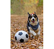 Four-legged Soccer Player Photographic Print