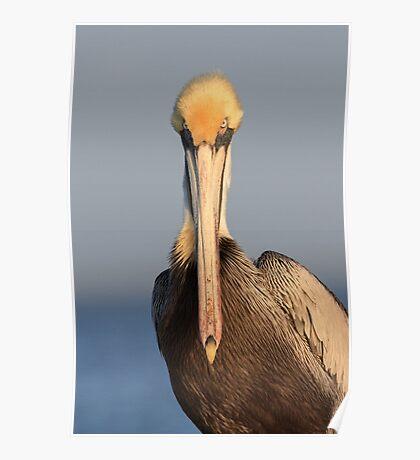 Pelican Attitude Poster