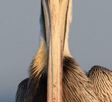 Pelican Attitude Sticker