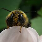 What pollen, no I haven't been near it... by Elaine Game