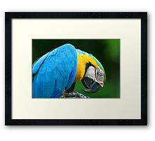 Macaw - Amazon Rainforest Framed Print