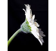 Daisy on the side Photographic Print