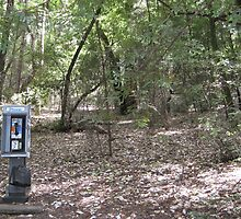 Phone Booth in the Woods #2 by Christopher Marcoux