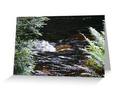 Franklin River, Wild Rivers UNESCO World Heritage Site Tasmania Greeting Card
