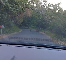 Deer in the road by Christopher Marcoux
