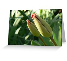 young buds Greeting Card