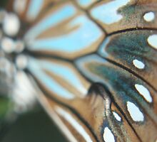 Butterfly Wing Close up! - Buderim Pond, Qld by Heidi Foreman